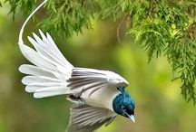 ♥ Animals ♡ Birds ♥ / cute imp ♞ ♞