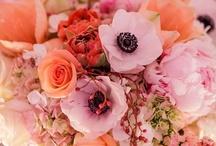 Flower Power / Blooms I love.  / by Allison Spector