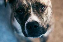 Puppies / by Christine Butzlaff