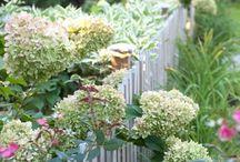 Garden Fence / Denne opslagstavle indeholder kun billeder af hegn til haven