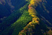 Japan / by Irina Chirkina