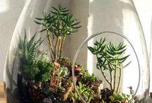 Terrific terrariums