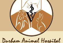 Veterinarian Durham / Best choice for veterinarian in Durham NC. Durham Animal Hospital 4306 N Roxboro St Durham, NC 27704 Call (919) 620-7387. - http://myhometownvet.com/durham