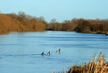 Thames Valley Park's attractions / Beautiful nature at Thames Valley Park.