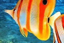 Balık (Fish)
