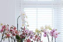 Arredare con le orchidee / Ecco qualche idea per arredare i vostri interni con delle magnifiche specie di orchidee. Basta poco. Serve solo fantasia, buon gusto e ottima scelta. Vieni a visitare il nsotro show-room www.florpagano.com