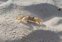 Aruba Flora & Fauna / Beautiful photos of Aruba's plants, wildlife and scenery.