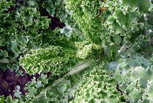 P l a n t   b a s e d   f o o d / Plant based food