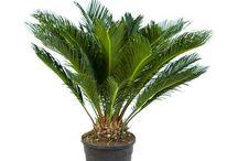 + Plantes dépolluantes Paris Pousse / Toutes les plantes dépolluantes en vente sur le site parispousse.fr