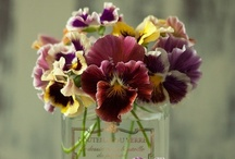 PaNsY'S <3