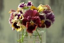 spring flowers / by Shelley Scribner
