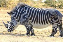 hewan unik