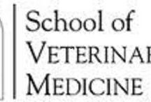 Louisiana Veterinarians Who Practice One or More Modalities in Holistic and Integrative Veterinary / http://www.bestcatanddognutrition.com/roger-biduk/list-of-900-u-s-holistic-integrative-veterinarians/