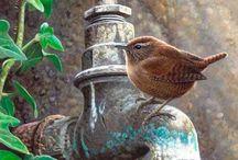 птахи такие разные