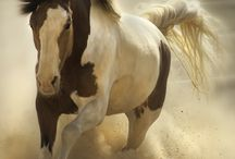 favoriet horse