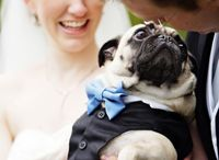 Pugs / by Jessica Buterbaugh