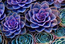 Succulents ROCK / I was a late bloomer with succulents, now I can't get enough of them:)) / by Sandollar Sandy #allaboutKeepingSeniorsSafe