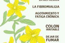 Beneficios de hierbas naturales