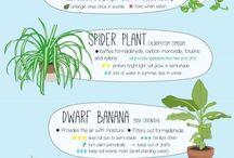 Plant! Plant! Plant!