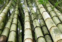 House of Bamboo / The versatility of bamboo is incredible it is strong long lasting and beautiful. / by Vicki Reardon