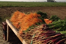 Debs Kitchen California Farm, Food & Wine Tours / Meet Ca. farmers, cooks, wine makers and more with Debs Kitchen