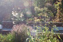 The garden / Garden inspiration