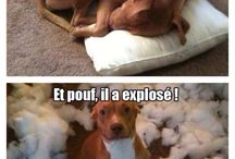 Humour :D