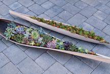 POTS & PLANTS / by Janet Henry