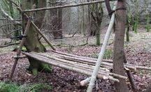 bosactiviteiten