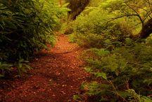Beautiful paths & walkways