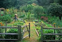 Vegetable garden / A little corner of our 129 acres is growing and growing