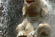 +Elephant!!