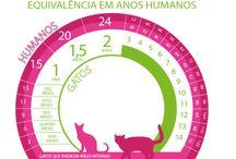 Gatos / brinquedos, saúde, curiosidades