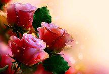 gif-uri cu flori