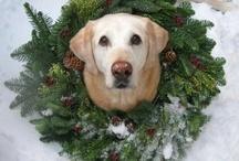 CHRISTMAS ANIMALS / Animals at Christmas Time