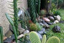 Jardines Cactus