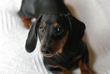 mini fur bebe