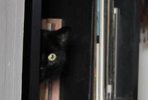 MY CAT / kitty