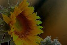 Beautiful flowers / by Savanna Joy