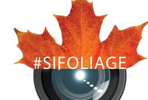 #SIFoliage / Staten Islanders are encouraged to post pictures of Staten Island fall foliage on Facebook, Twitter, and Instagram with the hashtag #SIFoliage and their location. We will repost the best photos on this board.