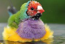 Birds / by Cindy Gillman