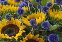 zahrada-kvetiny