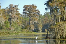 Wakulla: My favorite place on Earth. / by Cassandra Nichols