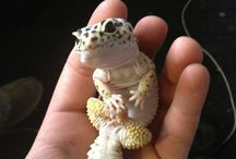 Crazy Lizard Lady
