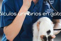 Consejos veterinarios