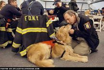 911 RESCUE AND SEARCH DOGS / Hero dogs who worked the pile. / by Mary Weidman