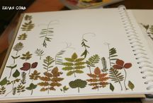 herbariums