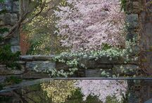 Ornamental Trees for Zone 4 & 5 / Ornamental trees for Garden interest.