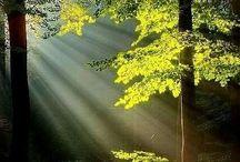Flores / Susy te envió un abrazo que te envuelva el alma y te acaricie el corazón