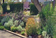 Australian native gardens